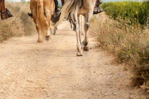 Rutes amb cavalls